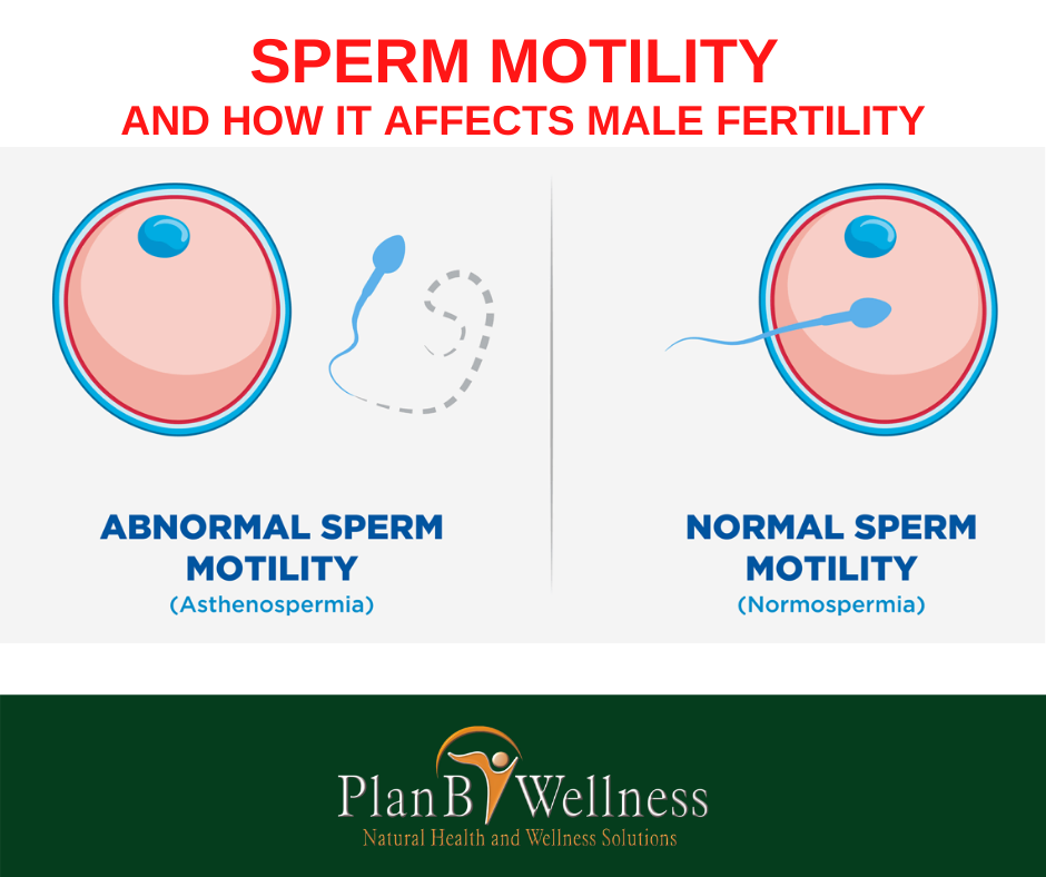 LOW SPERM MOTILITY AND HOW IT AFFECTS MALE FERTILITY