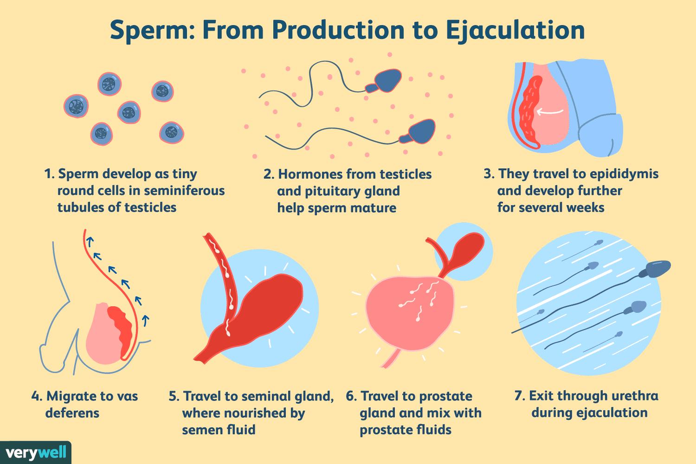 azoospermia overview- sperm production