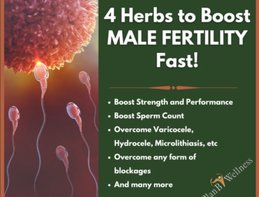 Top 4 Herbs to Boost Male Fertility Fast