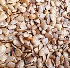 abeere seeds
